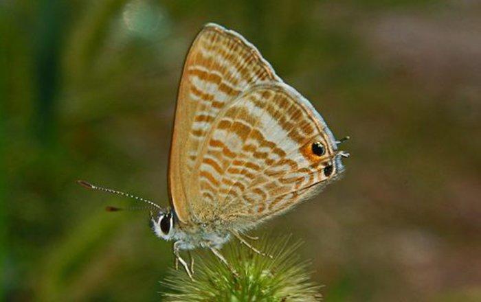 Экологи узнали, как экстремальные климатические явления влияют навыживание бабочек