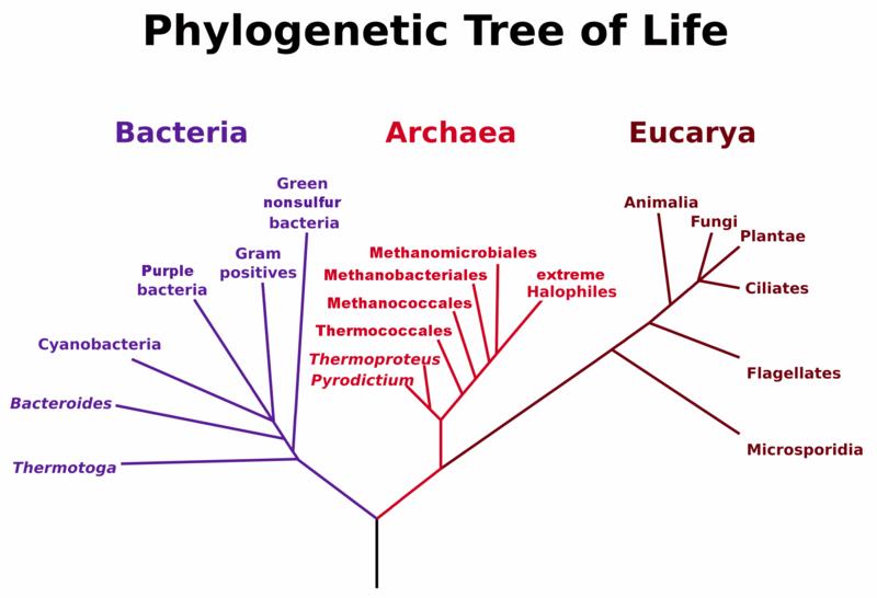 six characteristics of life in bacteria