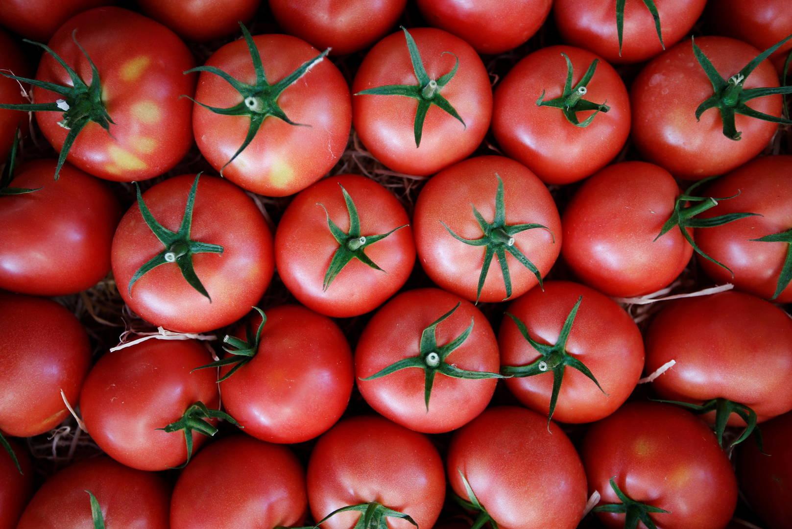 Je suis tomate: какую сторону принять в помидорных спорах