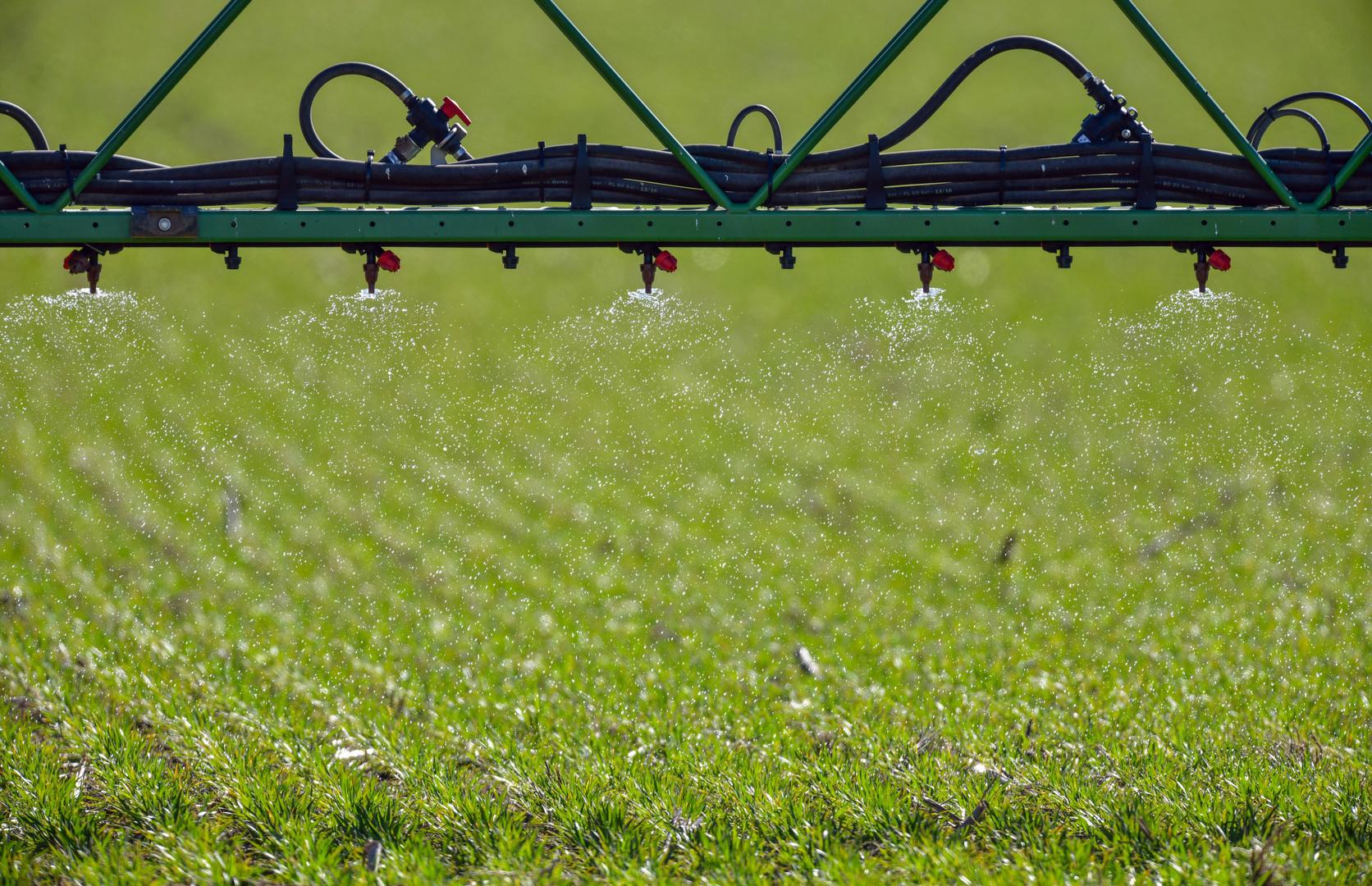 Прояснен механизм адаптации растений к колебаниям концентрации нитратов