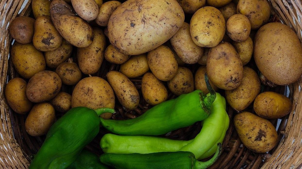 Агрономы нашли способ защитить картофель от почвенных болезней