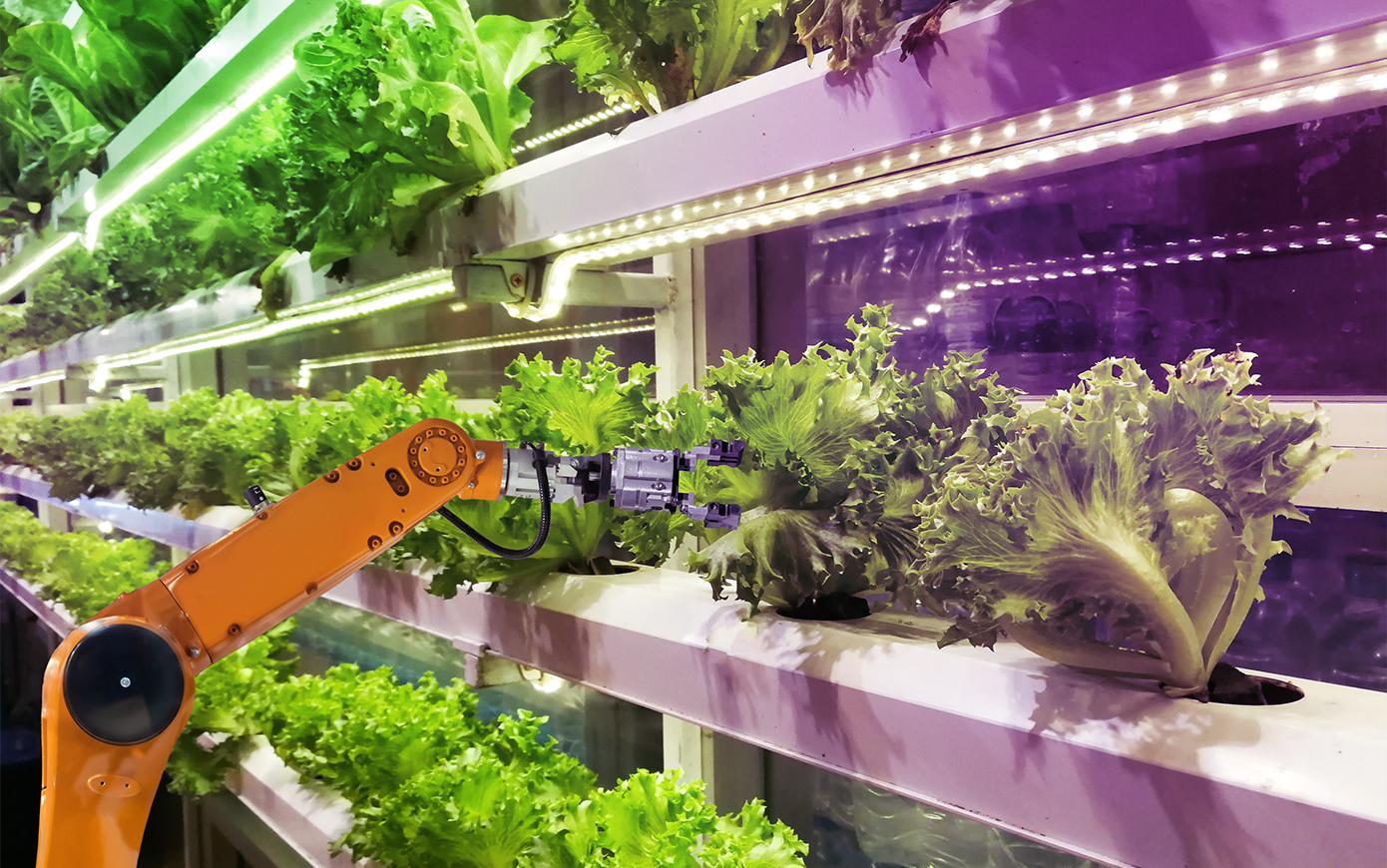 Ученые выяснили причины положительного эффекта фотобиостимуляции растений