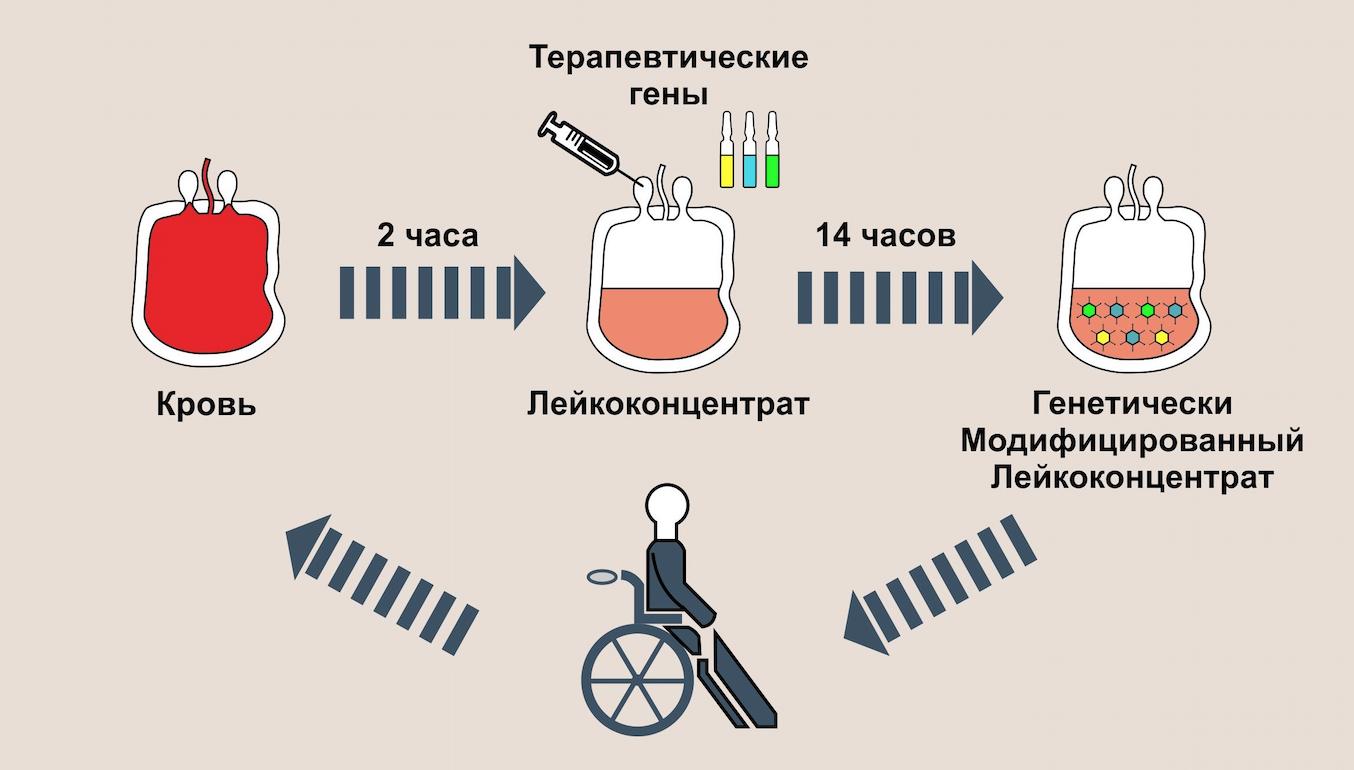 Разработан препарат для персонифицированной генной терапии на основе клеток крови пациента