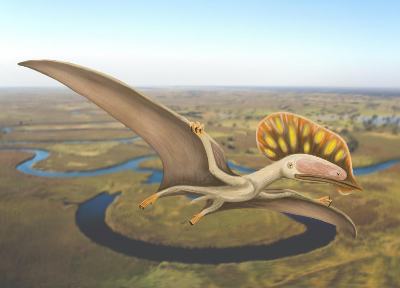 Китайский птерозавр из Великобритании