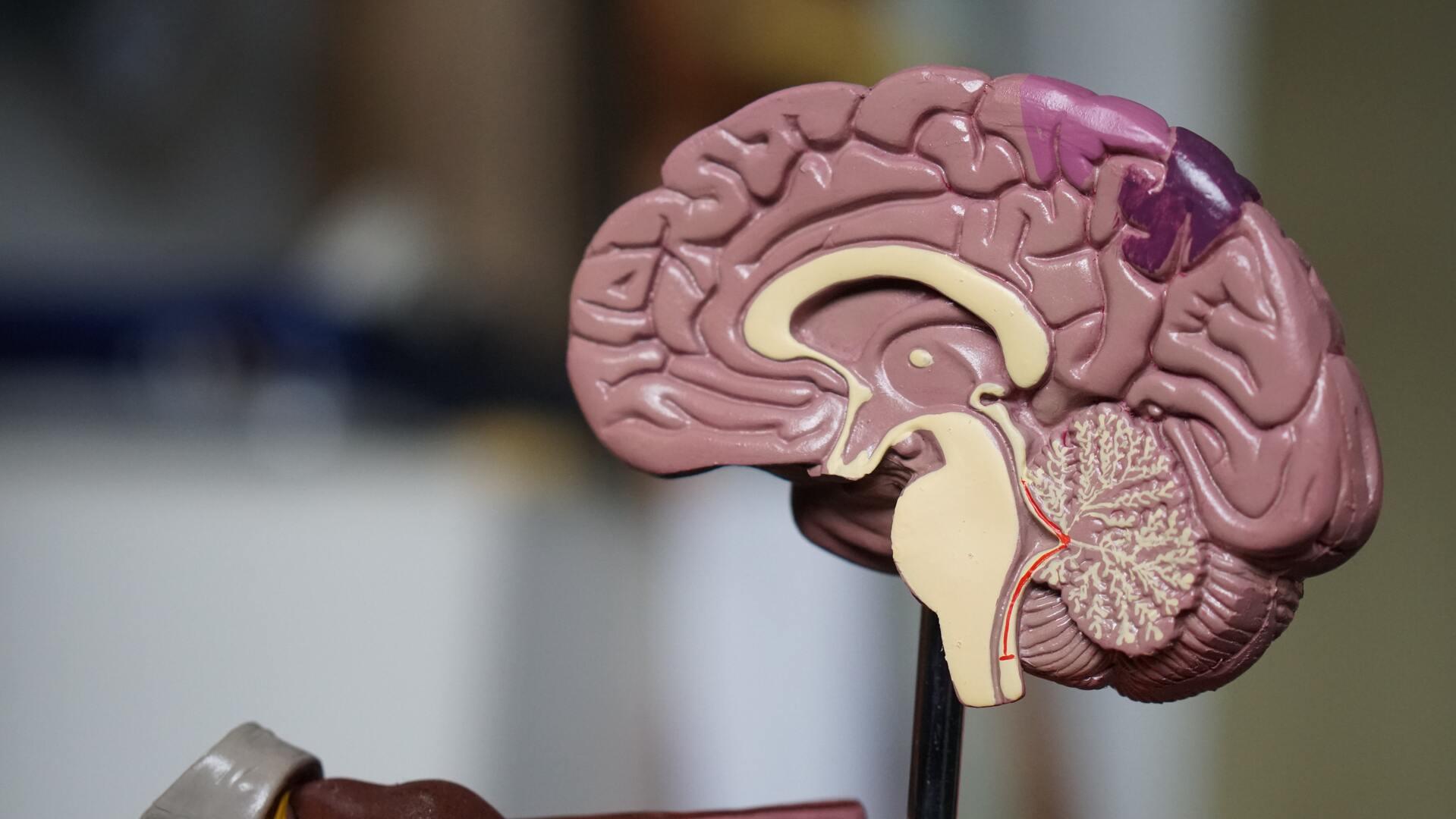Мозг и любопытство, мозг и новизна