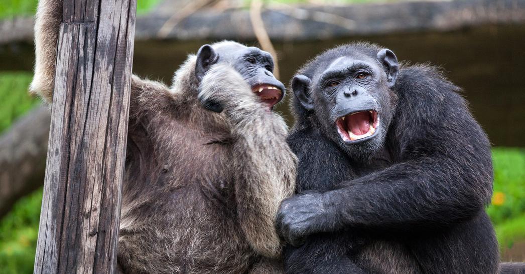 картинки смеются животные занятие