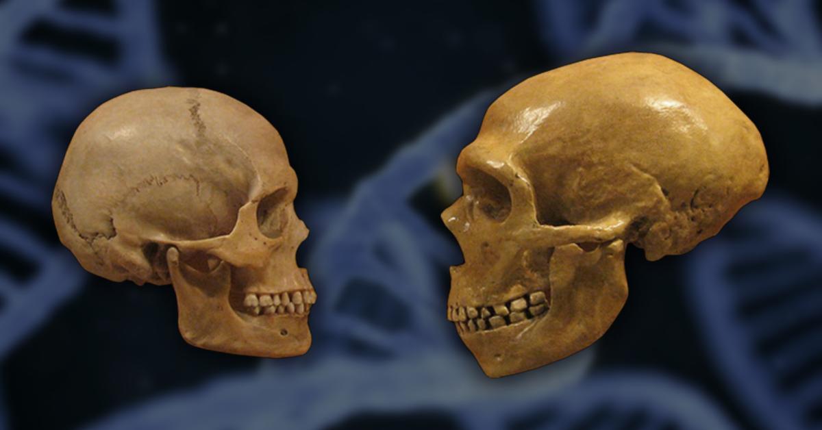 Гены неандертальцев не пропадают из ДНК европейцев