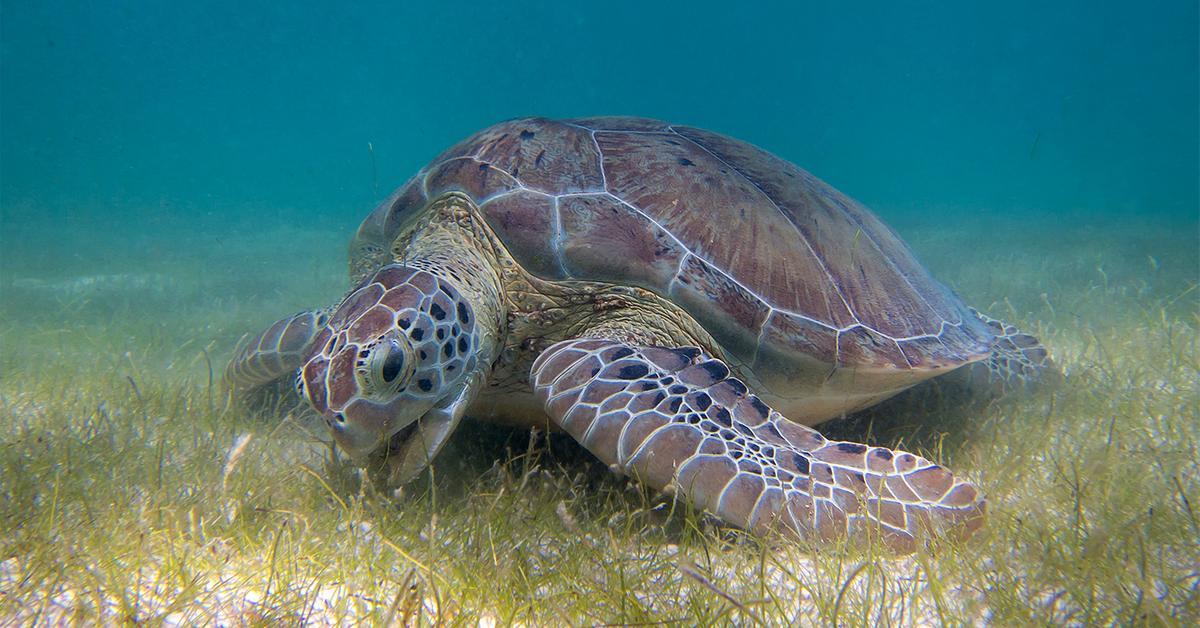 вид морских черепах 5 букв