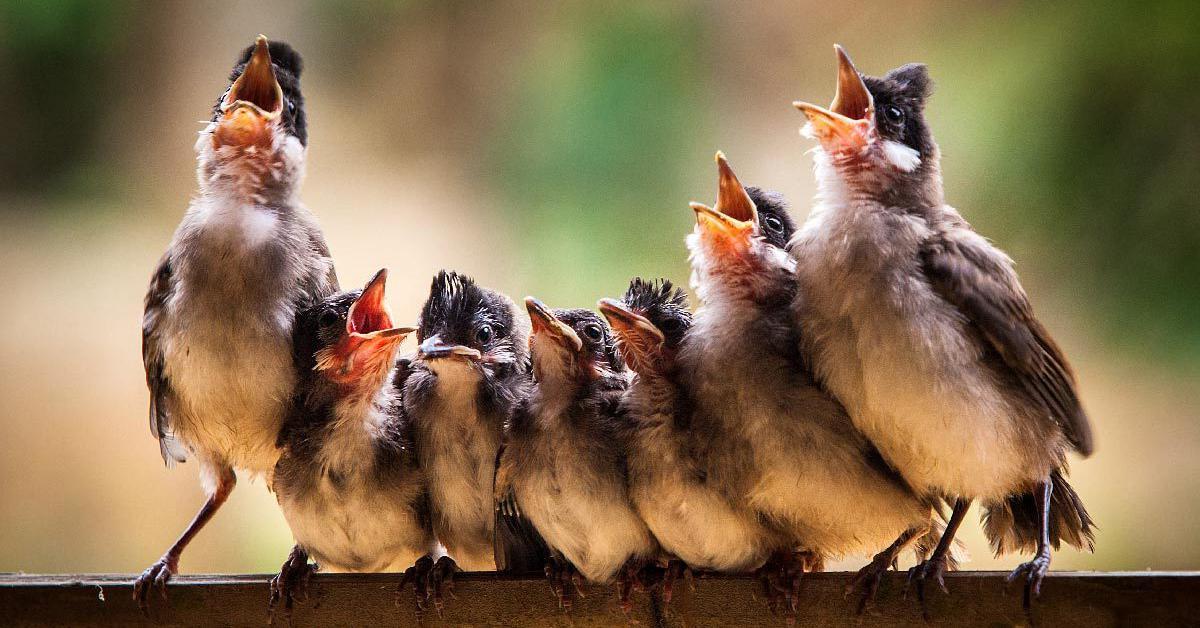 Доброе утро с птицами веселые картинки