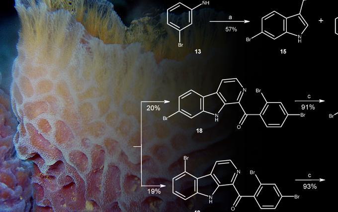 Из морской губки получили новые противоопухолевые соединения